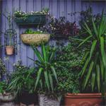 Garden Care @ BJ Mullen